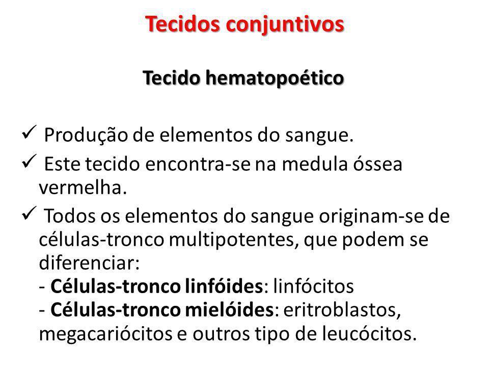 Tecidos conjuntivos Tecido hematopoético