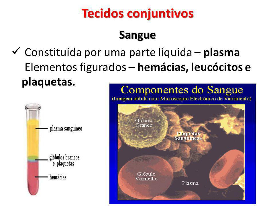 Tecidos conjuntivos Sangue
