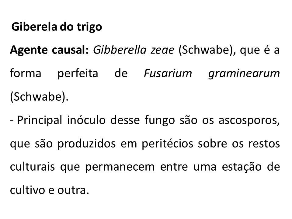 Giberela do trigo Agente causal: Gibberella zeae (Schwabe), que é a forma perfeita de Fusarium graminearum (Schwabe).