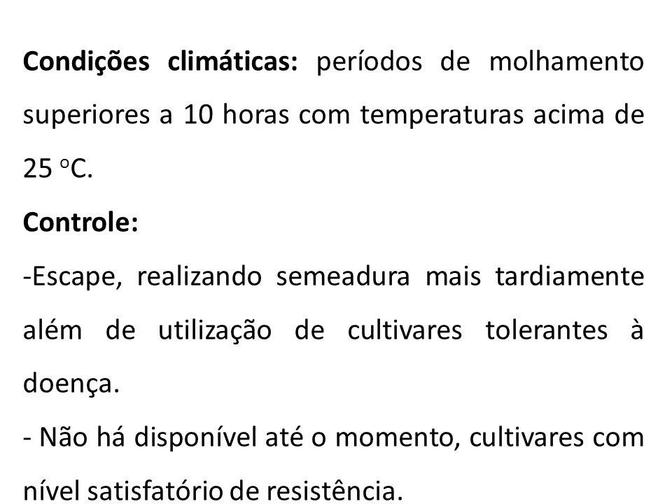 Condições climáticas: períodos de molhamento superiores a 10 horas com temperaturas acima de 25 oC.
