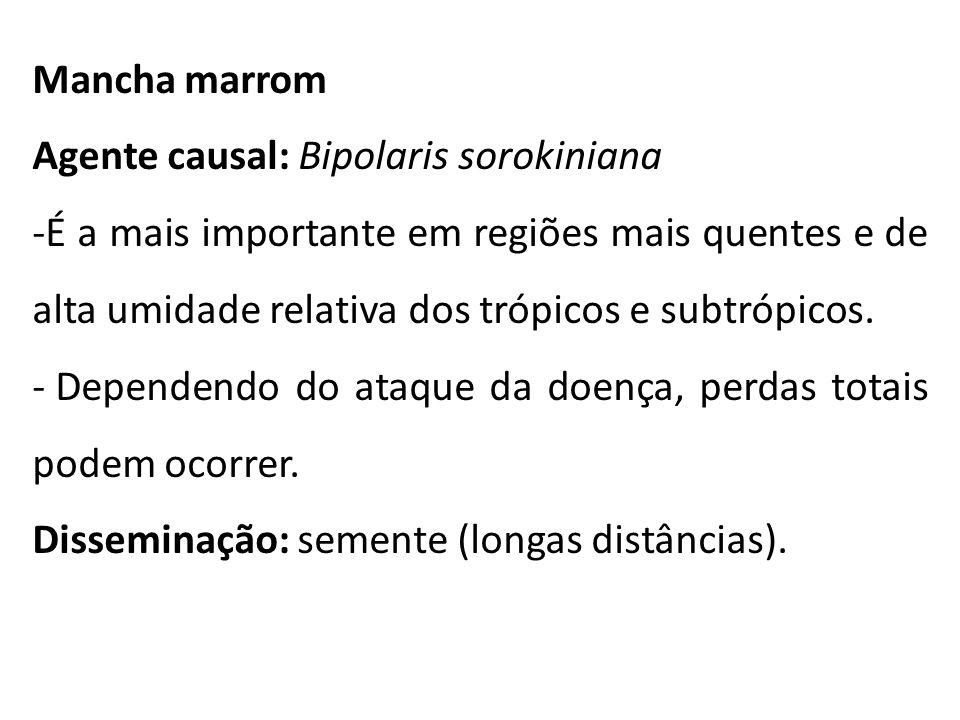 Mancha marrom Agente causal: Bipolaris sorokiniana.