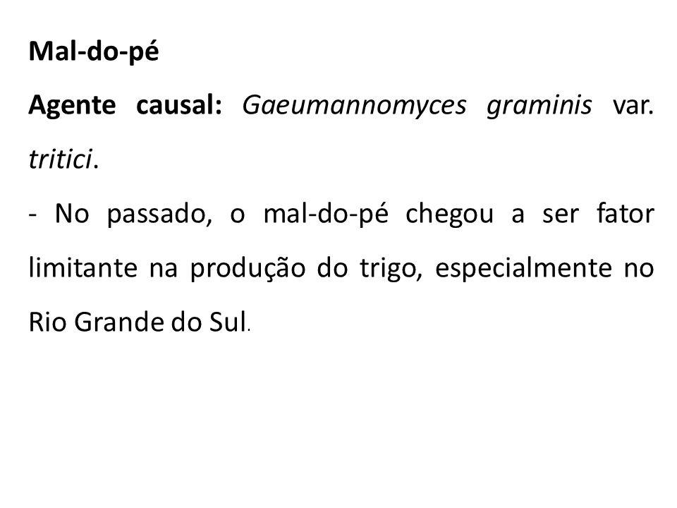 Mal-do-pé Agente causal: Gaeumannomyces graminis var. tritici.
