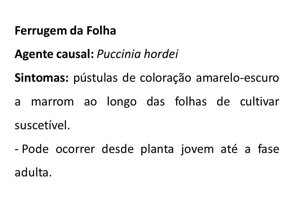 Ferrugem da Folha Agente causal: Puccinia hordei.