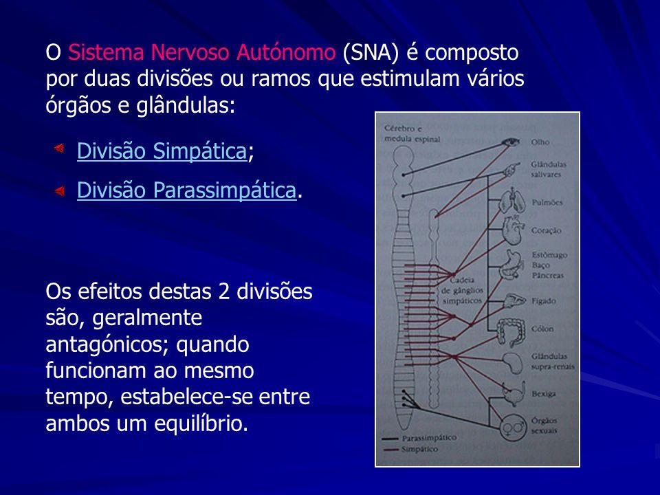 O Sistema Nervoso Autónomo (SNA) é composto por duas divisões ou ramos que estimulam vários órgãos e glândulas:
