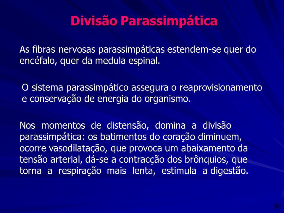 Divisão Parassimpática