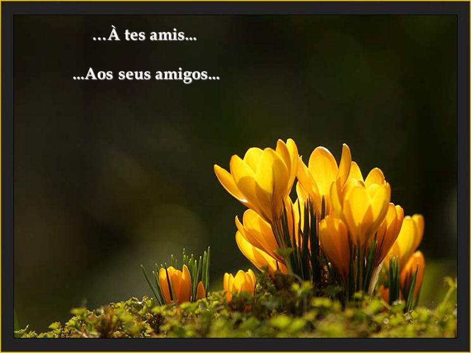 …À tes amis... ...Aos seus amigos...