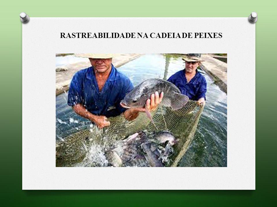 RASTREABILIDADE NA CADEIA de peixes