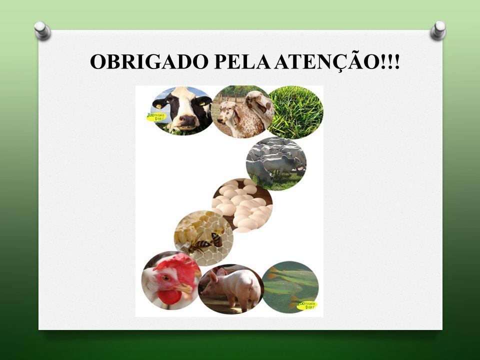 OBRIGADO PELA ATENÇÃO!!!