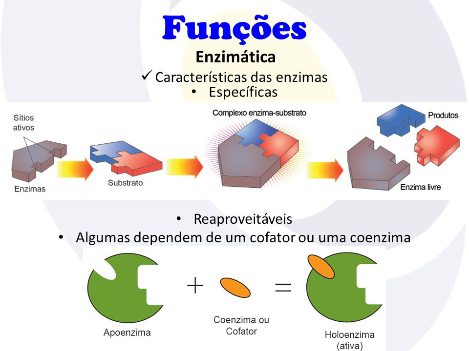 Funções Enzimática Características das enzimas Específicas