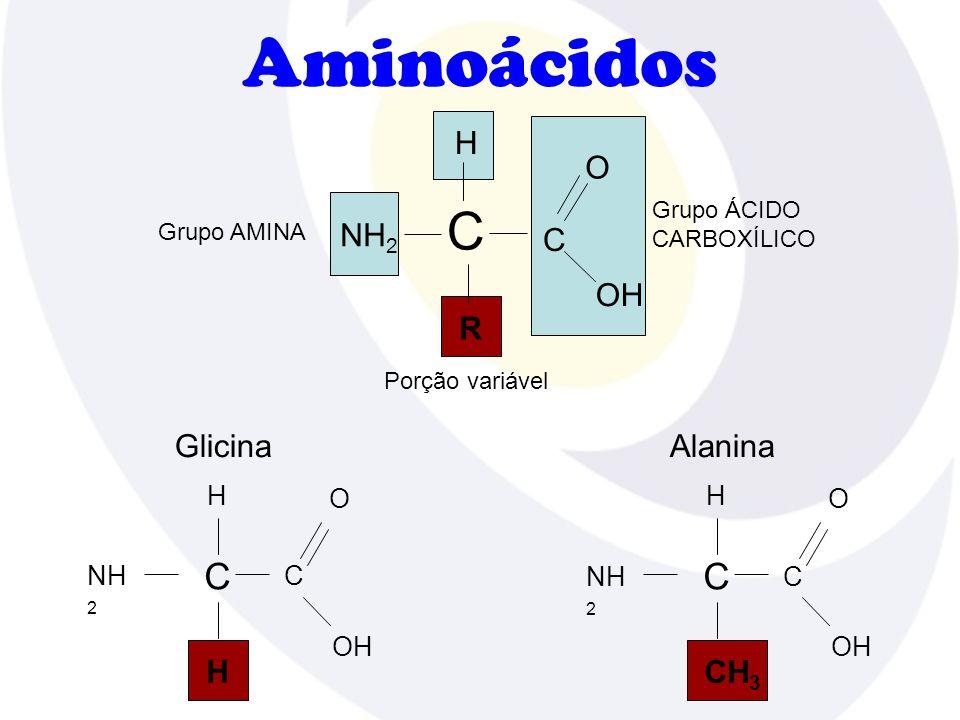 Aminoácidos H O NH2 C OH R Glicina Alanina CH3 C H NH2 C OH H NH2 C OH