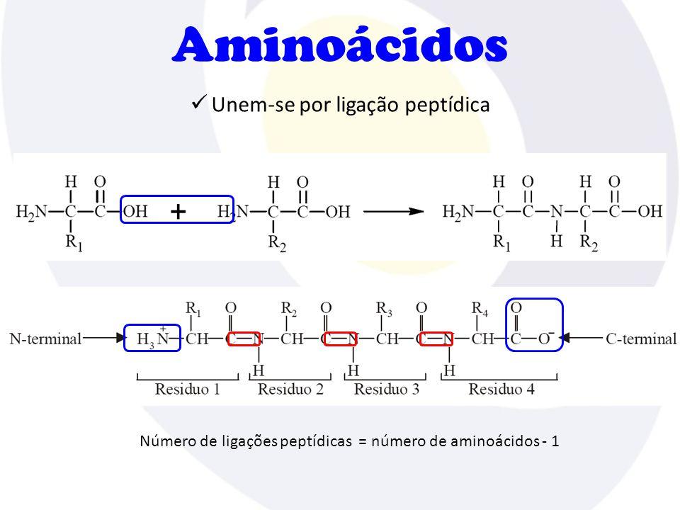 Aminoácidos Unem-se por ligação peptídica