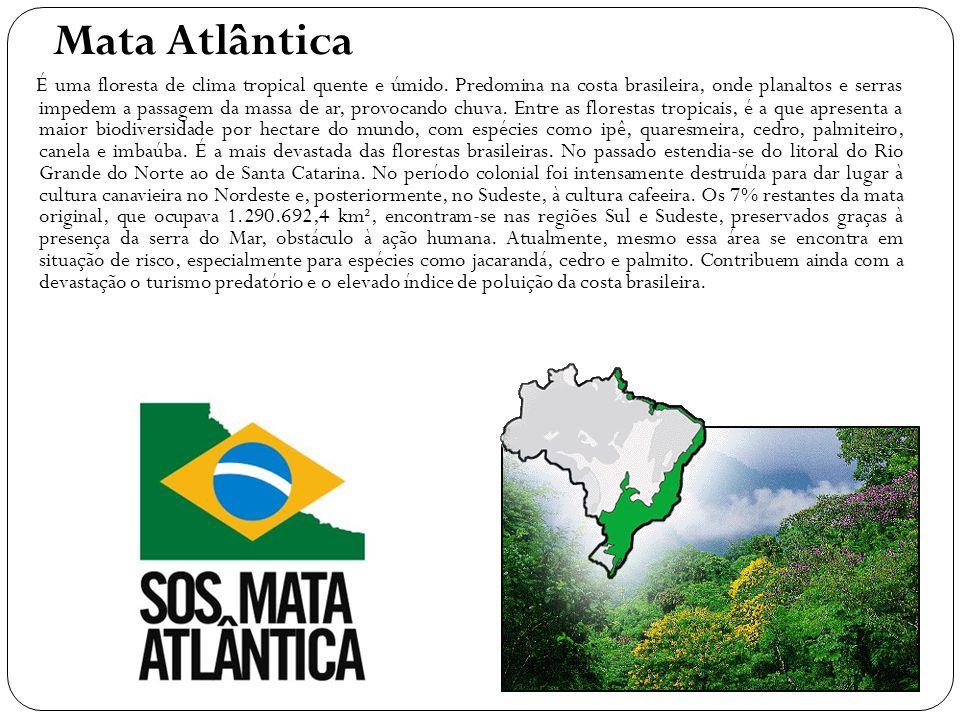 Mata Atlântica É uma floresta de clima tropical quente e úmido
