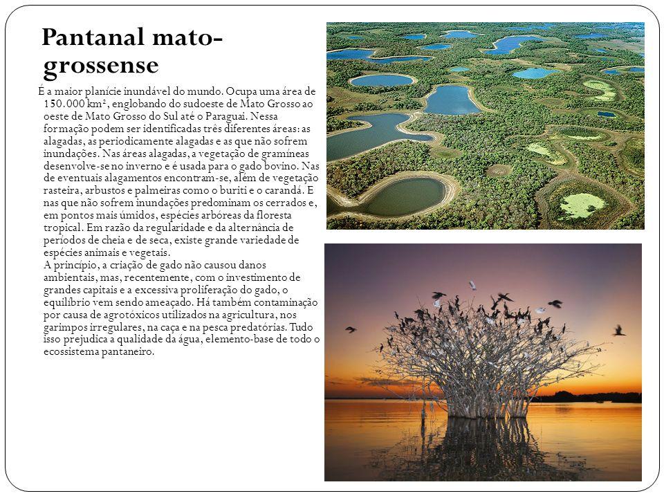 Pantanal mato- grossense É a maior planície inundável do mundo