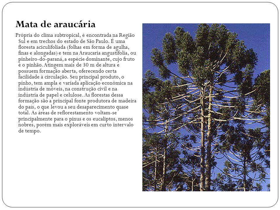 Mata de araucária Própria do clima subtropical, é encontrada na Região Sul e em trechos do estado de São Paulo.