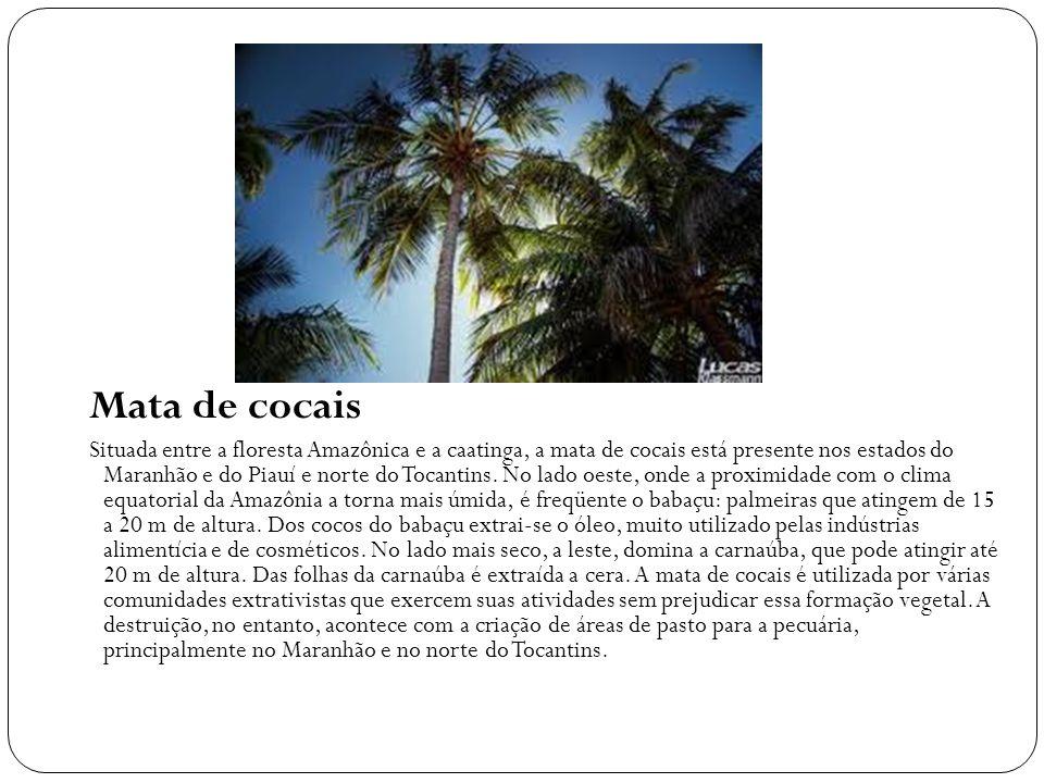 Mata de cocais Situada entre a floresta Amazônica e a caatinga, a mata de cocais está presente nos estados do Maranhão e do Piauí e norte do Tocantins.