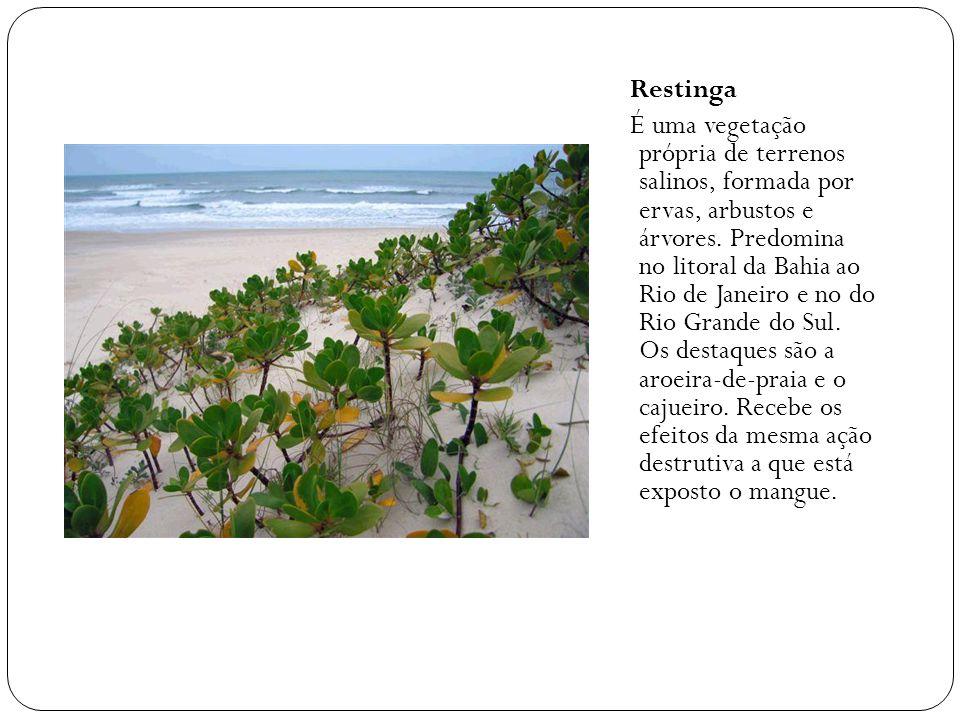 Restinga É uma vegetação própria de terrenos salinos, formada por ervas, arbustos e árvores.