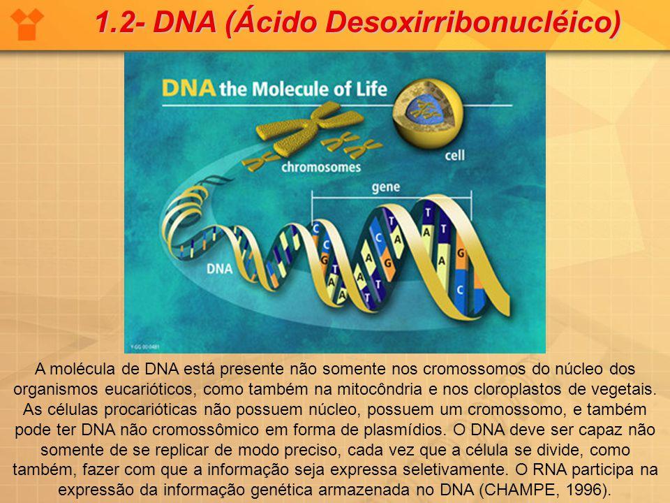 1.2- DNA (Ácido Desoxirribonucléico)