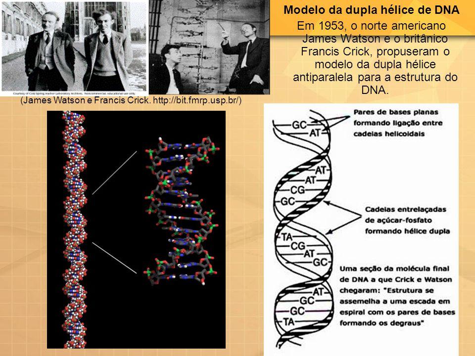 Modelo da dupla hélice de DNA