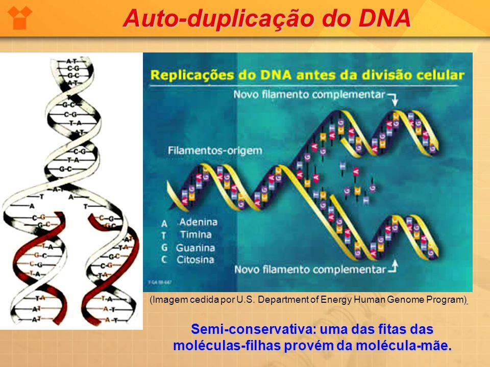 Auto-duplicação do DNA