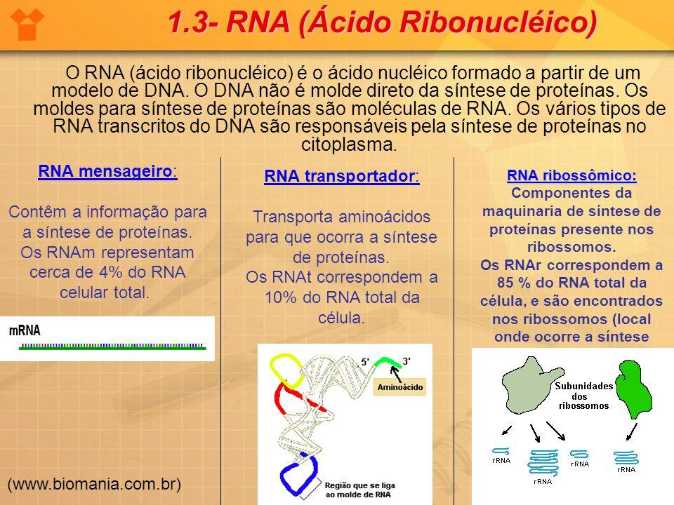 1.3- RNA (Ácido Ribonucléico)