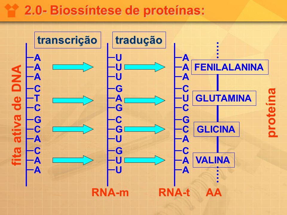 2.0- Biossíntese de proteínas: