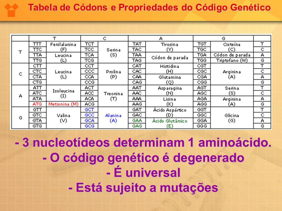 - 3 nucleotídeos determinam 1 aminoácido.