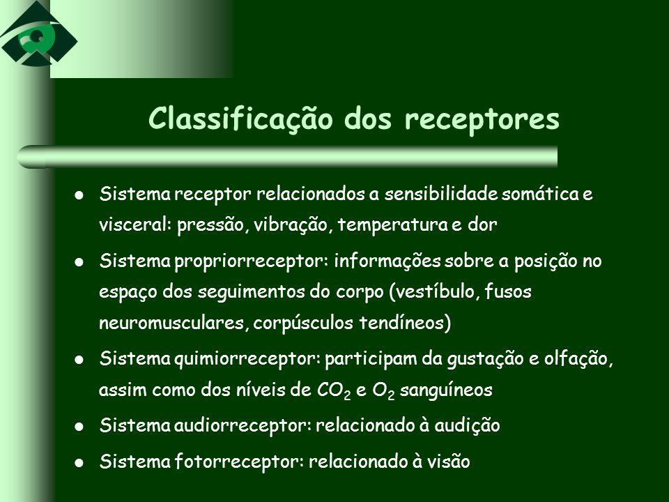 Classificação dos receptores
