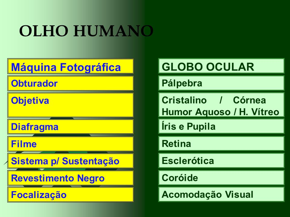 OLHO HUMANO Máquina Fotográfica GLOBO OCULAR Obturador Pálpebra
