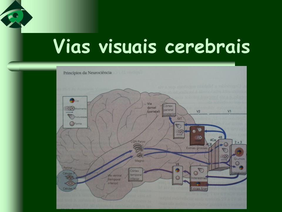 Vias visuais cerebrais