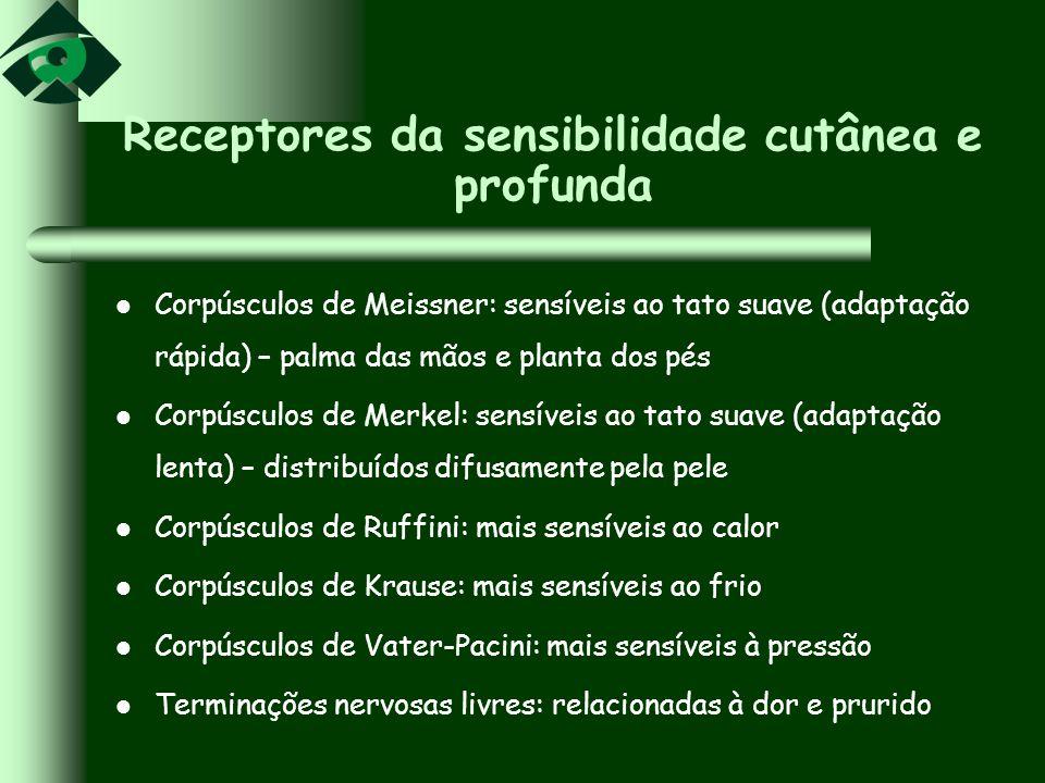 Receptores da sensibilidade cutânea e profunda