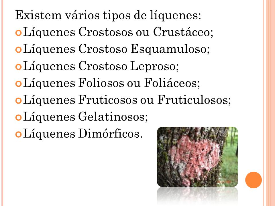 Existem vários tipos de líquenes: