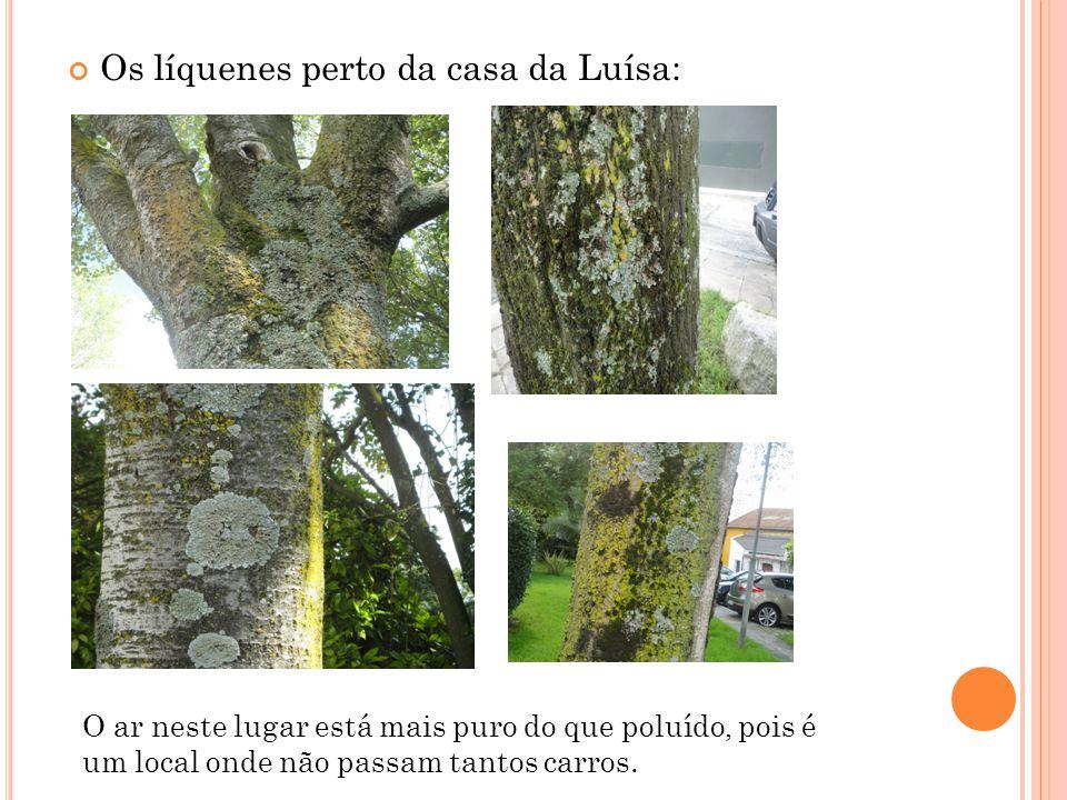 Os líquenes perto da casa da Luísa: