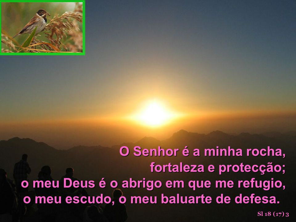 fortaleza e protecção; o meu Deus é o abrigo em que me refugio,