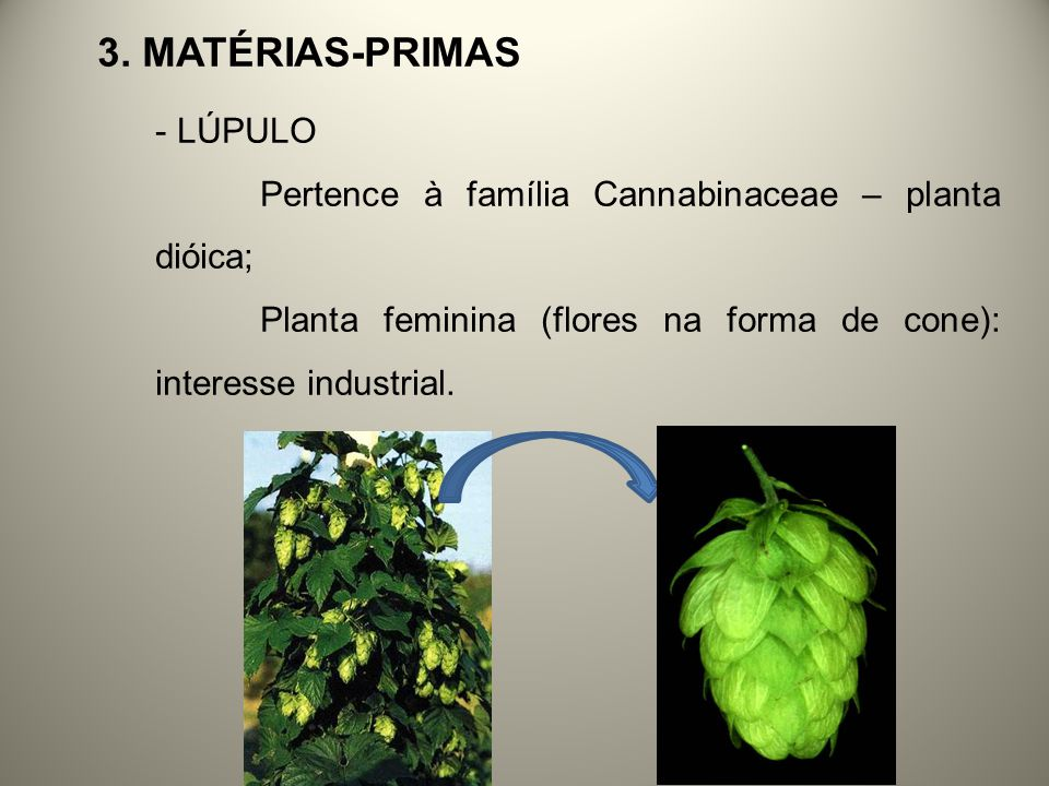 3. Matérias-primas LÚPULO