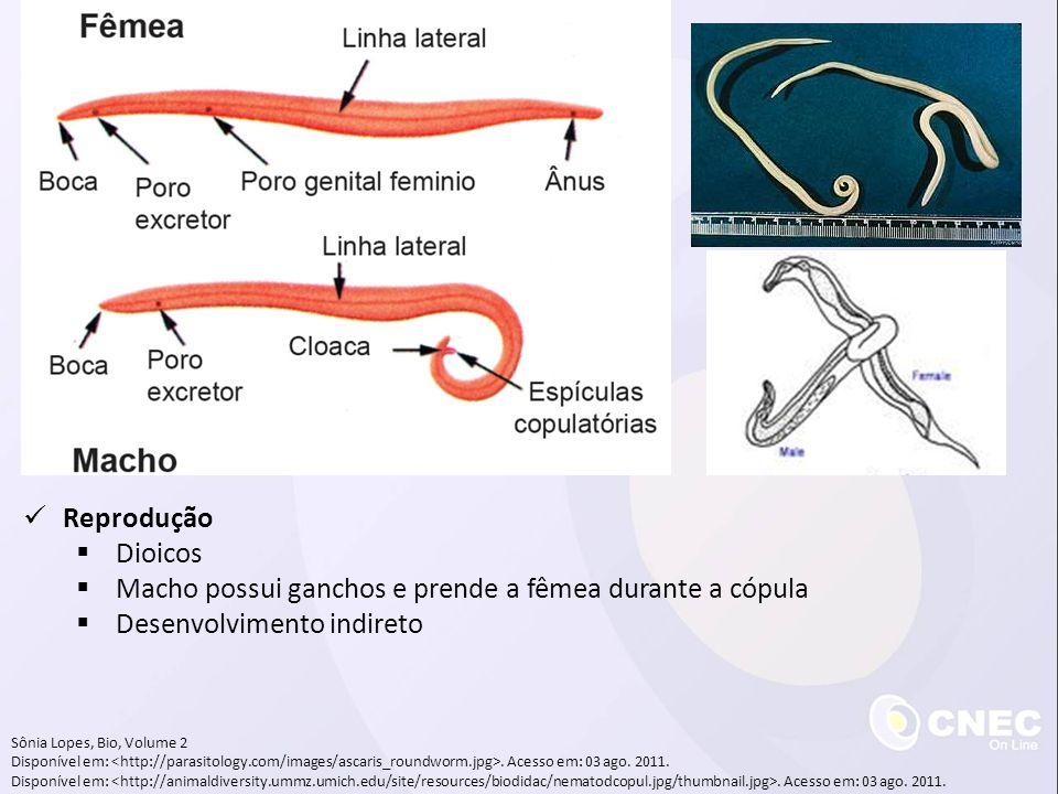 Macho possui ganchos e prende a fêmea durante a cópula
