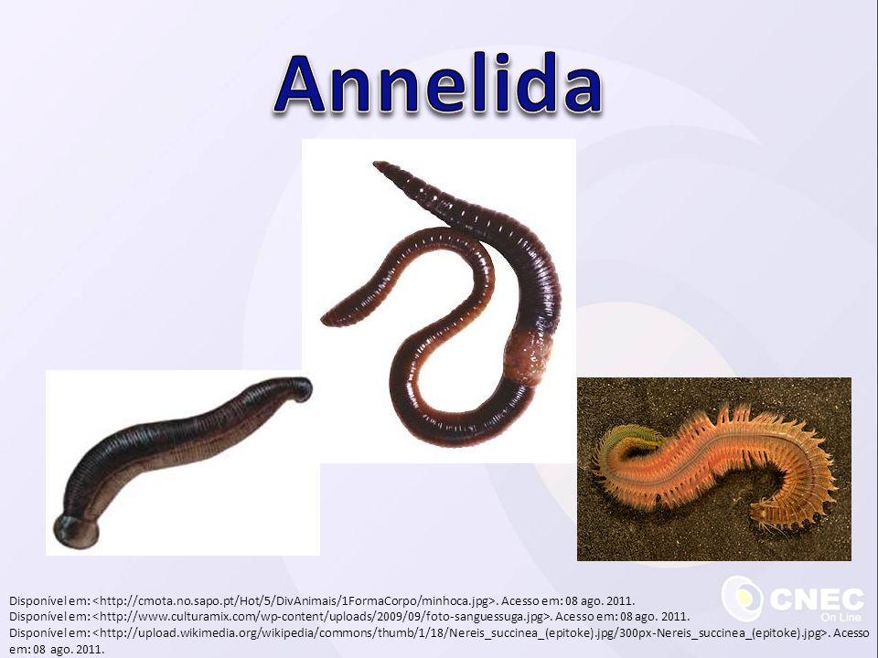 Annelida Disponível em: <http://cmota.no.sapo.pt/Hot/5/DivAnimais/1FormaCorpo/minhoca.jpg>. Acesso em: 08 ago. 2011.
