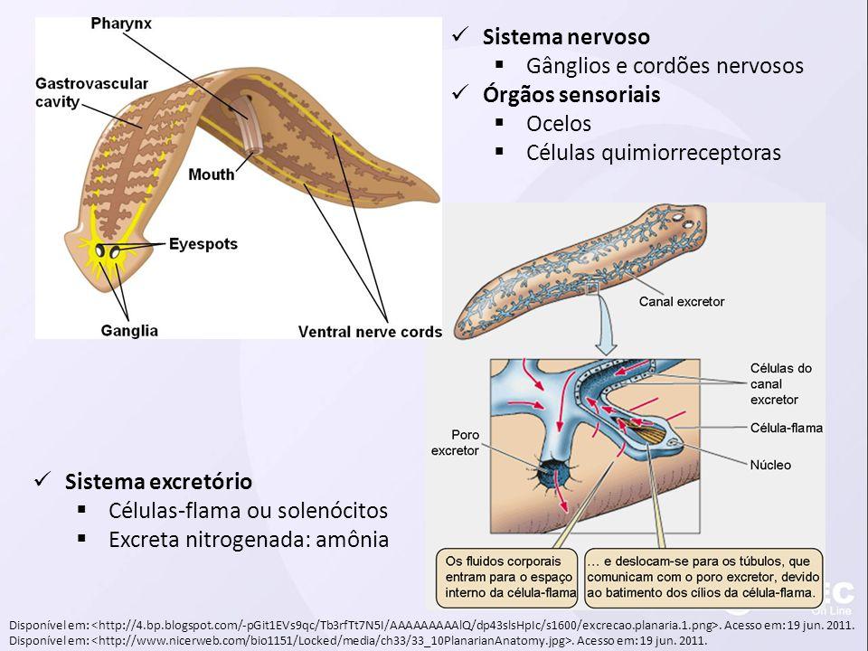 Gânglios e cordões nervosos Órgãos sensoriais Ocelos