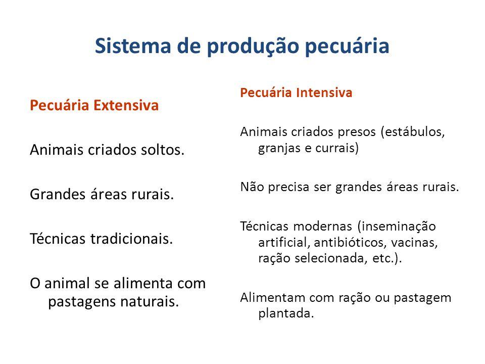 Sistema de produção pecuária
