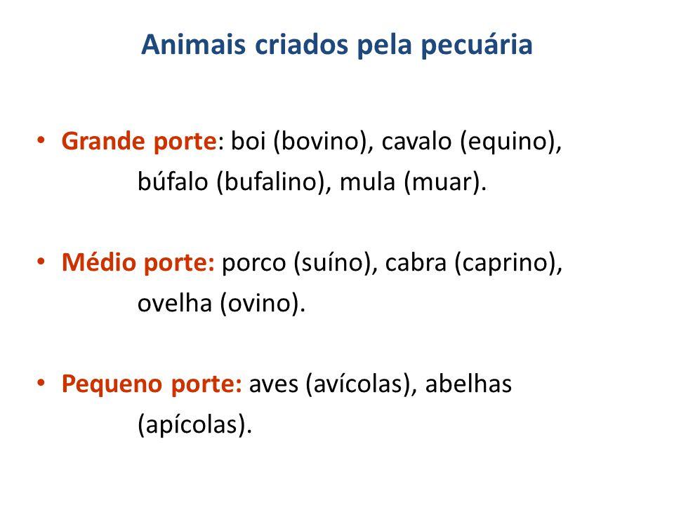 Animais criados pela pecuária