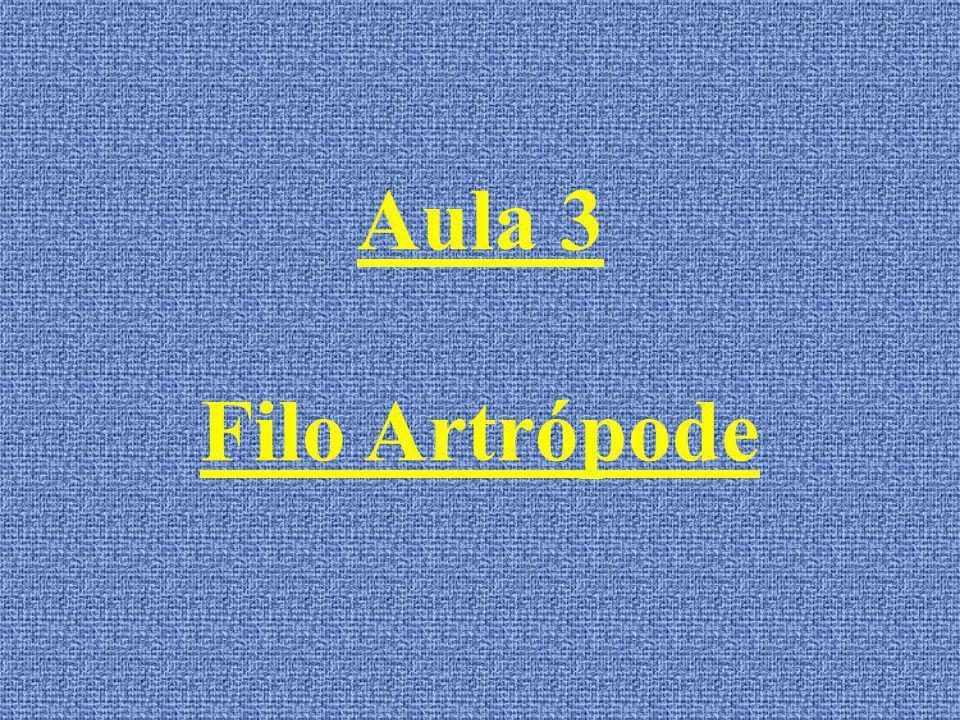 Aula 3 Filo Artrópode