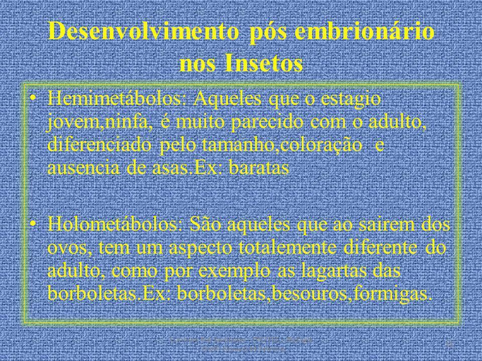 Desenvolvimento pós embrionário nos Insetos