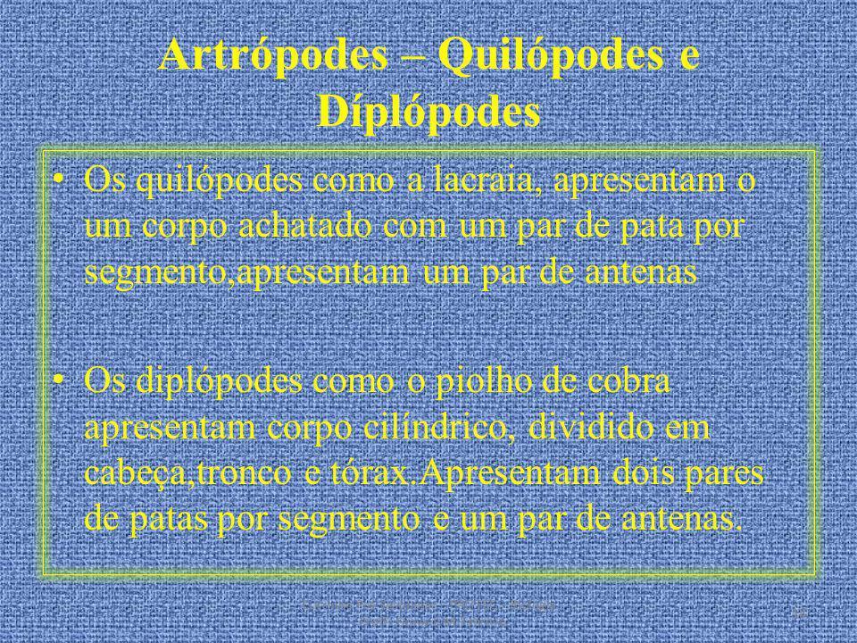 Artrópodes – Quilópodes e Díplópodes