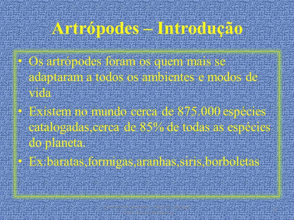 Artrópodes – Introdução