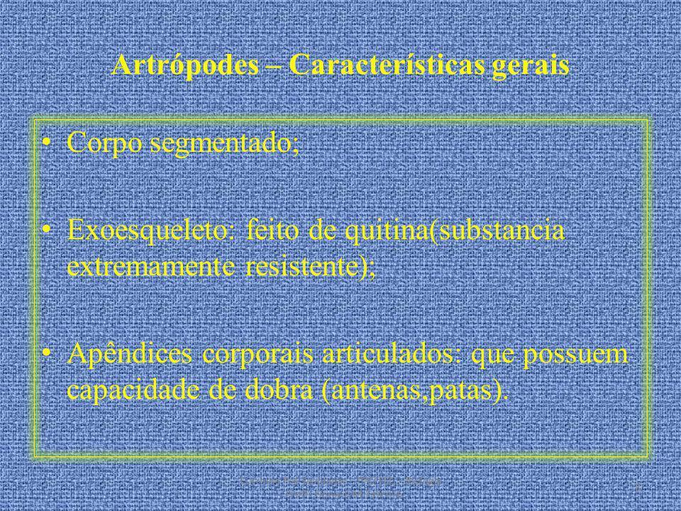Artrópodes – Características gerais