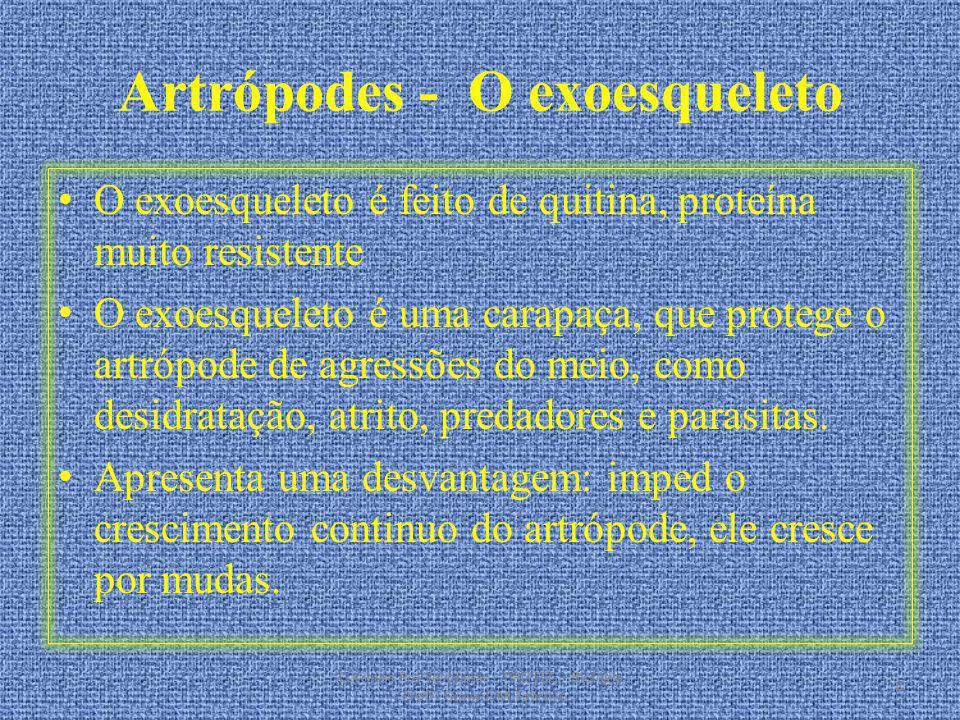 Artrópodes - O exoesqueleto