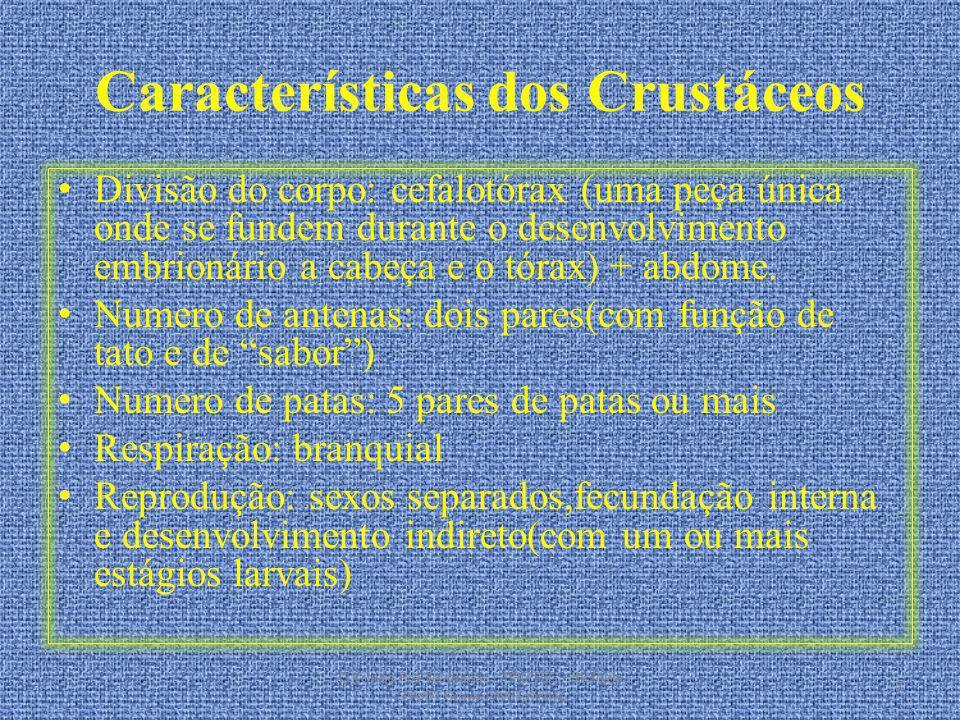 Características dos Crustáceos