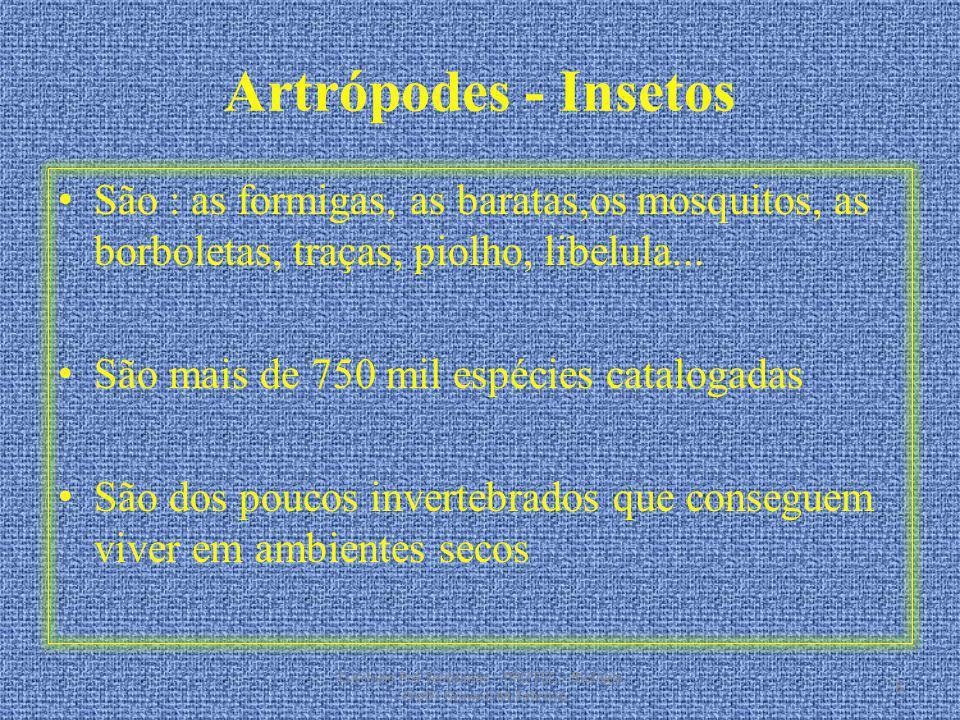 Artrópodes - Insetos São : as formigas, as baratas,os mosquitos, as borboletas, traças, piolho, libelula...