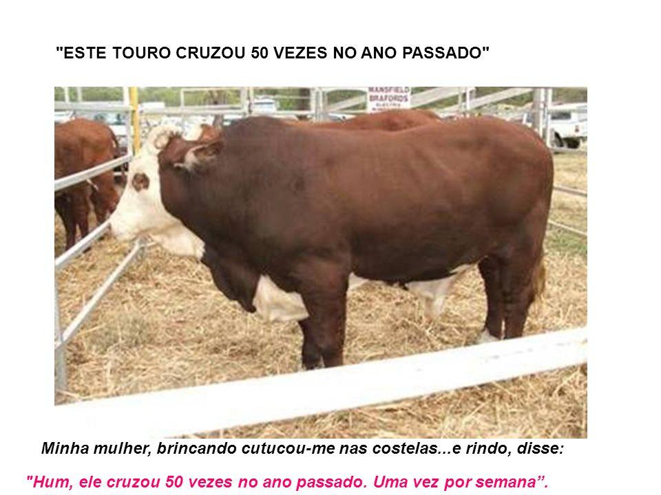 ESTE TOURO CRUZOU 50 VEZES NO ANO PASSADO