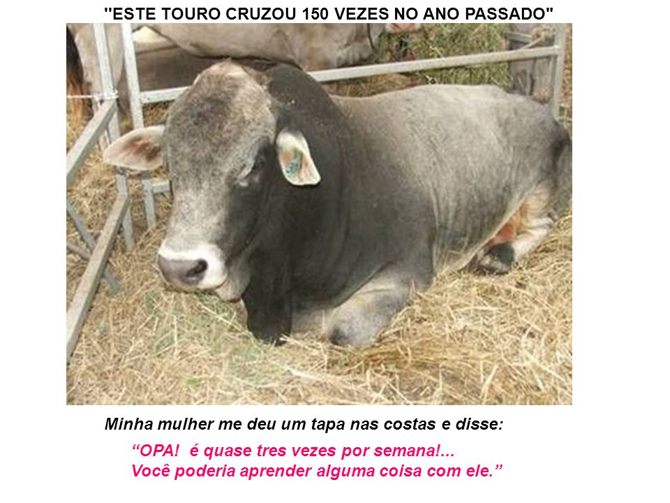 ESTE TOURO CRUZOU 150 VEZES NO ANO PASSADO
