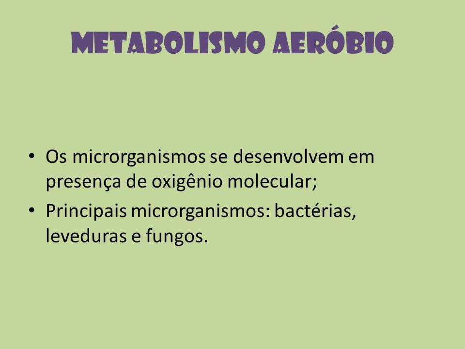 Metabolismo Aeróbio Os microrganismos se desenvolvem em presença de oxigênio molecular; Principais microrganismos: bactérias, leveduras e fungos.